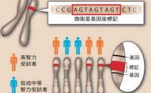 寻找智力基因