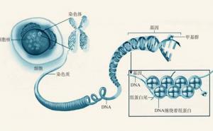 表观遗传学的作用