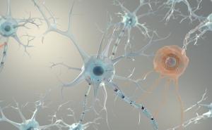 大脑把记忆存在哪
