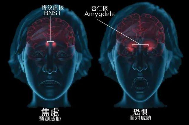 恐惧和焦虑脑回路高度重叠